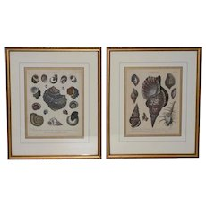 "Pair of Early 19th Century ""Conchology"" Color Etchings c.1802"