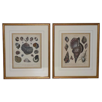 """Pair of Early 19th Century """"Conchology"""" Color Etchings c.1802"""