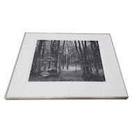"Bruce Barnbaum ""North Downs Forest, England"" Black & White Photograph c.1980"