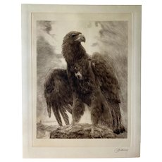 Curt Meyer-Eberhardt (1895-1977) Lofty Portrait of an Eagle Etching C.1930s