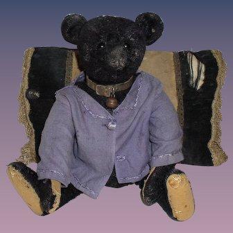Antique Authentic & ORG Steiff Very Rare 1912 Steiff Black Teddy Bear