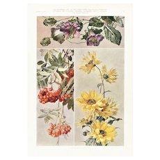Art Nouveau Floral Design Lithograph c1900