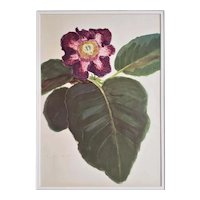 1940 French Botanical by Arlette Davids-Gloxinia