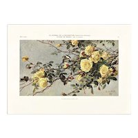 1909 Botanical Lithograph Yellow Roses