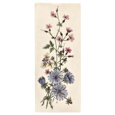 Original French Botanical Lithograph Print