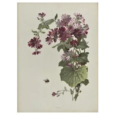 1880s French Botanical in Purples