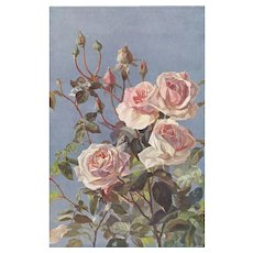 1902 Botanical Lithograph Print- Pink ROSES - Red Tag Sale Item