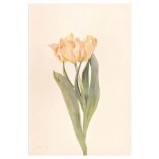 1939 French Botanical Tulip Print