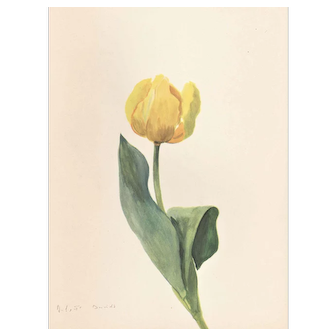 1939 French Botanical Tulip Vintage Print