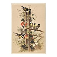 Matted Vintage Chromolithograph-Designs in Nature with BIRDS c1880s