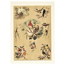Matted Vintage Chromolithograph-Designs in Nature-BIRDS c1880s