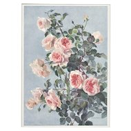 Matted Botanical Flowers Lithograph of ROSES
