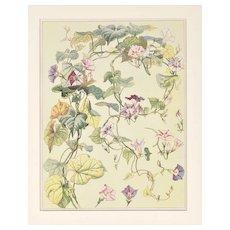 Matted Vintage 1901 Botanical Summer Flowers