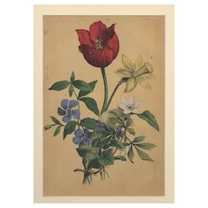 RARE Matted French Mid-1880s Botanical Chromolithograph Print Tulip