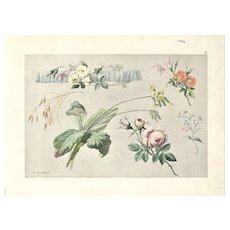 Original French Vintage Botanical Lithograph-ROSES