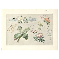 Original French Vintage Botanical Lithograph-ROSES