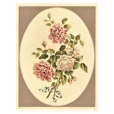 Original French Vintage Botanical Lithograph of ROSES