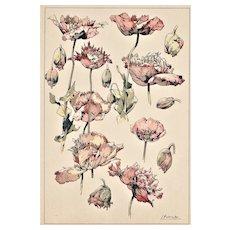 Original French Art Nouveau Botanical Chromolithograph-Poppy