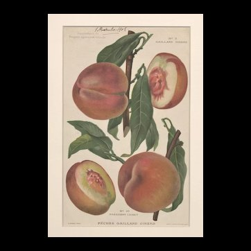 RARE PAIR-Matted 1908 French Chromolithograph Fruit Botanicals