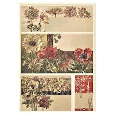 Matted French Art Nouveau Botanical Chromolithograph