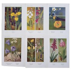 Set of 6-1922 French Botanicals-Field Flowers