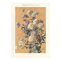 French 1905 Botanical Lithograph-Chrysanthemums