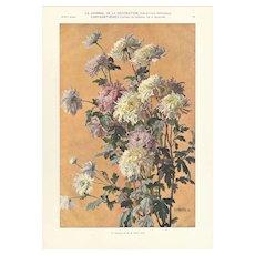 French 1905 Botanical Lithograph-Chrysanthemums