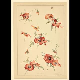 c1900 French Art Nouveau Botanical Design Lithograph by Habert-Dys