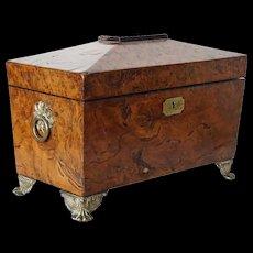 English Regency Brass Mounted Burl Yew Wood Tea Caddy