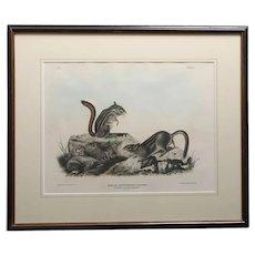 JOHN JAMES AUDUBON Hand Colored Lithograph, Tamias Townsendii, Bachman (Squirrels)
