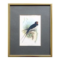 English Chromolithograph Print, Lloyds Natural History Chimney Swallow Bird