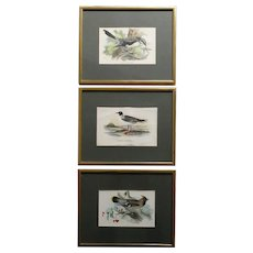 Three English Chromolithographs Prints, Lloyd's Natural History Birds