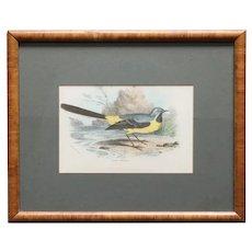 English Chromolithograph Print, Lloyd's Natural History Grey Wagtail Bird