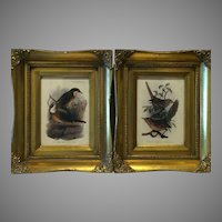 Pair Ornate Frames Offset Lithograph Joseph Smit 1900's Bird Prints