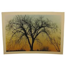 Vintage 1971 DANIEL FARBER 'Elm Silhouette' Tree at Sunset Photograph - Listed Trial Print