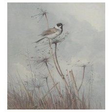 Reed Bunting...Painting of a Reed Bunting...Bird painting...
