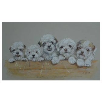 Painting. Dog painting. Painting of dogs. Terrier puppies. Mabel Gear.