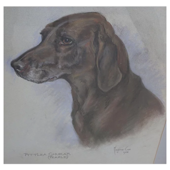 Dog painting. Marjorie Cox. Pittlea Chukar. Pastel painting Labrador.