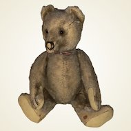"""Old Pointed Nose Mohair Jointed 12"""" Steiff Teddy"""
