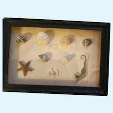 Miniature Dollhouse Seashell Seahorse Framed Diorama Ocean Box