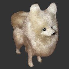 Antique Miniature SpItz Samoyed French Fashion Salon Companion Dog