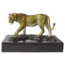 A cold painted Austrian bronze sculpture, 'Lioness', 1915c.