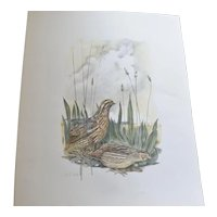 "Watercolour of "" Wachteln "" ( Quail ) by artist Bärwe, mid 20th century."