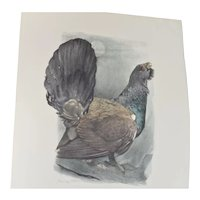 "Watercolour of "" Auerhahn"" ( Wood Grouse ) by artist Bärwe, mid 20th century."