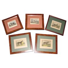 Group of Five Antique Decorative Framed Prints of Horses
