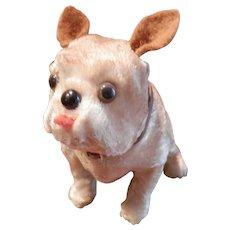 Sweetest Bulldog Ever