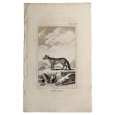 1812 Comte de BUFFON'S Histoire Naturelle,   4 1/2 X 7 1/4 IN. Plate LITTLE JACKAL #328,   Without Text Pages.