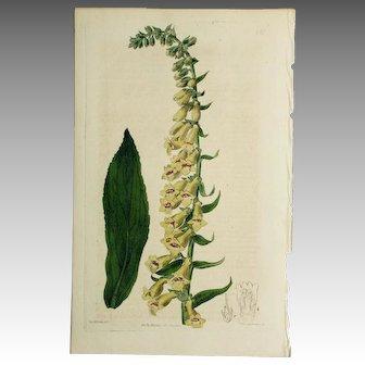 3 Original  Ridgeway Botanical Engravings #2
