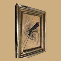 Pretty Blue Bird in Wonderful Old Gold Frame