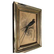 Pretty Blue Bird in Wonderful Old Gold Frame